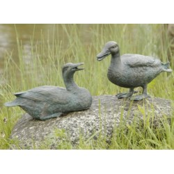 Common teal - sitting